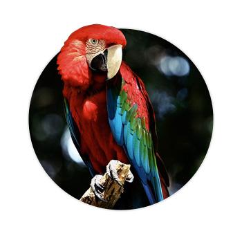 Arara Vermelha em cima de um galho