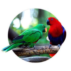 Dois pássaros em cima de um galho
