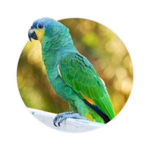 Papagaio do mangue em cima de um suporte