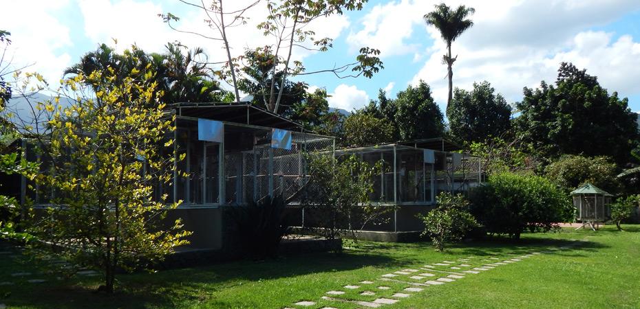 Quintal com plantas e gaiola grande para manter animais em cativeiro