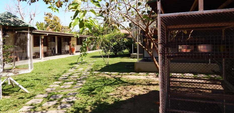 Quintal com gaiolas, gramado e árvores