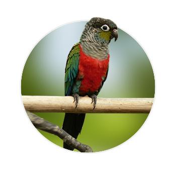 Pássaro em cima de um galho